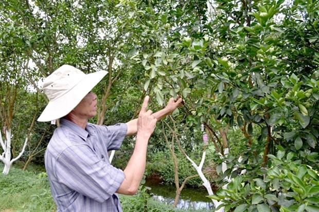 Dong Thap preserves endangered pink mandarin hinh anh 1