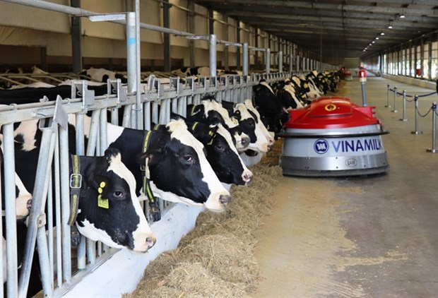 Numerous dairy firms enjoy profit growth in Q3 hinh anh 1