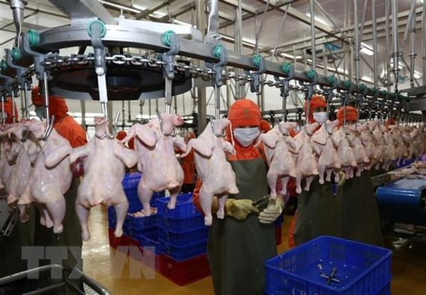 Vietnamese chicken to be shipped to Singapore, Hong Kong hinh anh 1