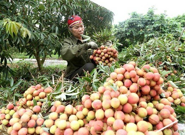 Agriculture sector works towards reaching 40 bln USD export target hinh anh 1