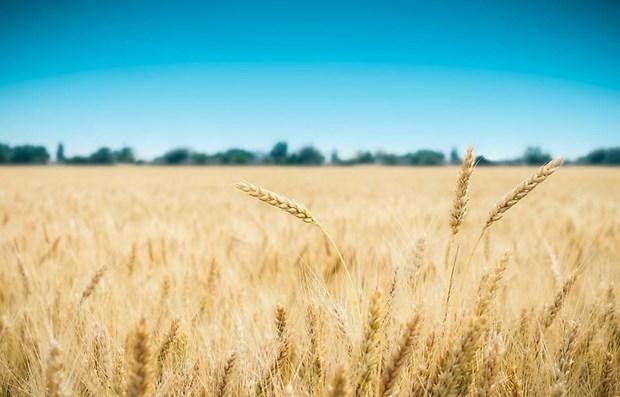 Vietnam, Australia to expand barley trade hinh anh 1