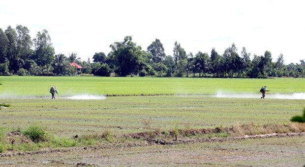 Country's largest rice producer expands advanced farming models hinh anh 1