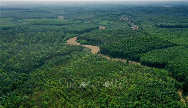 Forest areas in central region grow 374,000 ha in 2015-2019 hinh anh 1