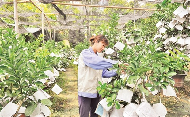 Hanoi's agriculture strives to achieve growth target hinh anh 1
