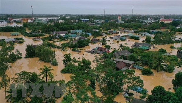 Central provinces receive seeds to restart farming after floods hinh anh 1