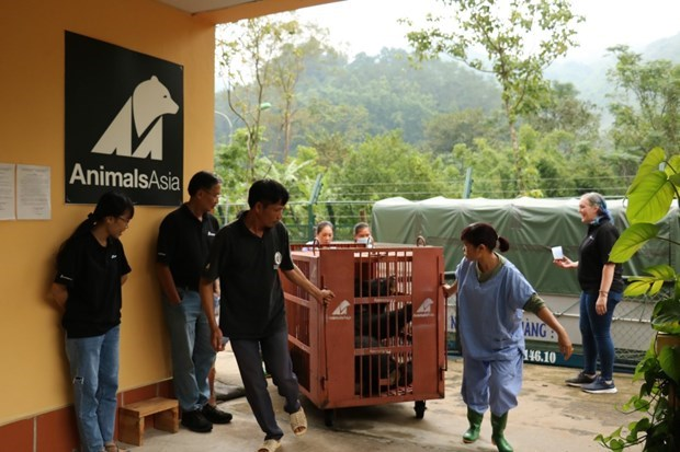 Seven captive bears transferred to rescue centre hinh anh 1