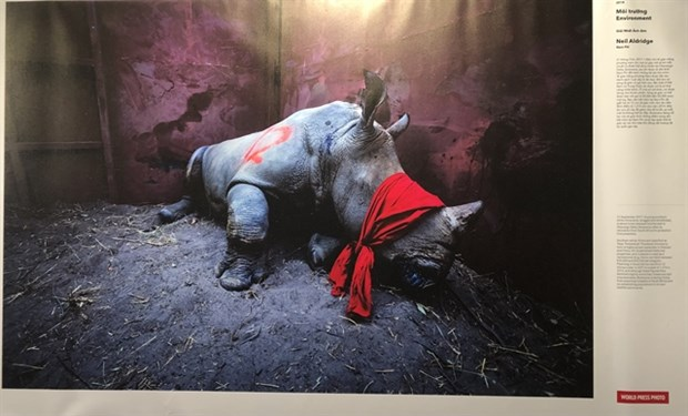 World Press Photo Exhibition 2020 opens in Hanoi hinh anh 1