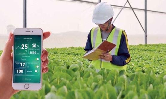 Vietnam promoting hi-tech farming hinh anh 1