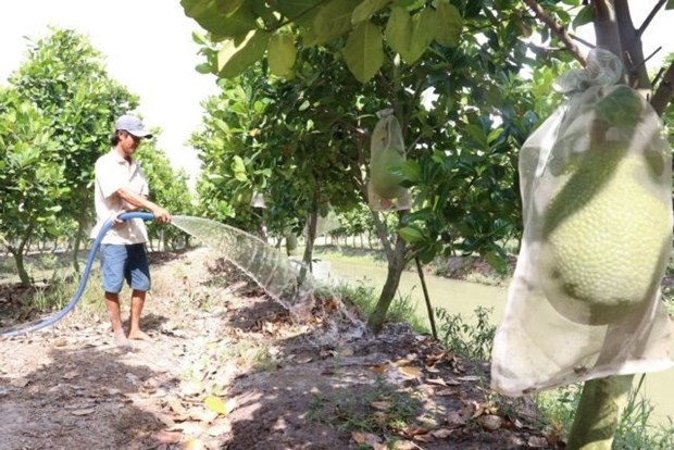 Dong Thap to expand fruit cultivation, improve fruit value hinh anh 1