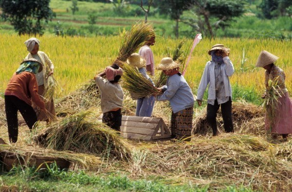 Indonesia to leave out some sensitive goods from RCEP tariffs hinh anh 1