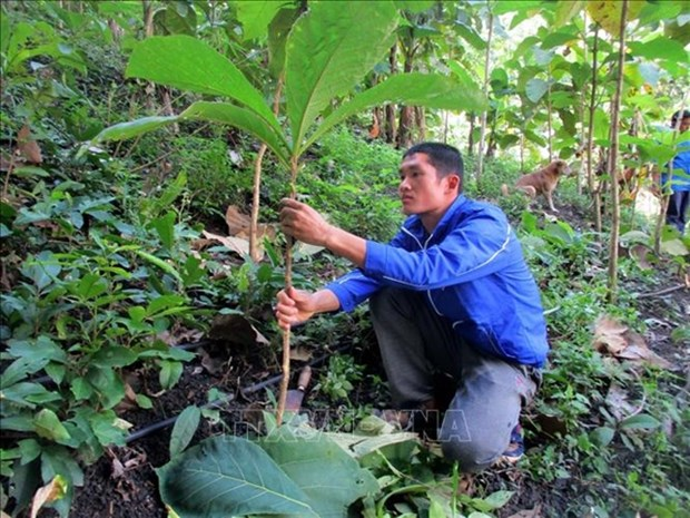 Young activists plant trees to prevent floods, landslides hinh anh 1