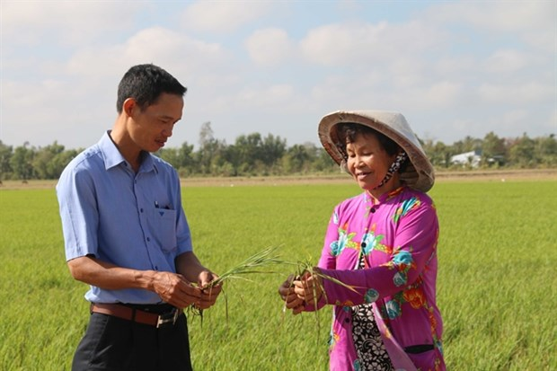 Tra Vinh takes measures to deal with drought, saltwater intrusion hinh anh 1