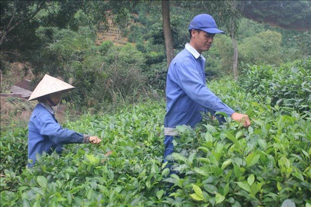 Cooperatives' workers need better skills: forum hinh anh 1