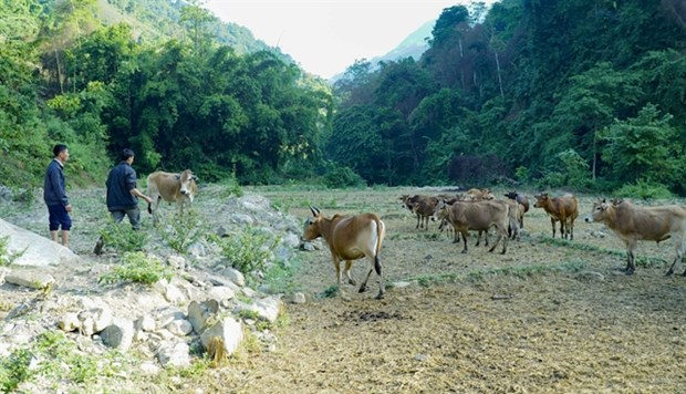 Int'l cooperation essential to support agricultural development hinh anh 1