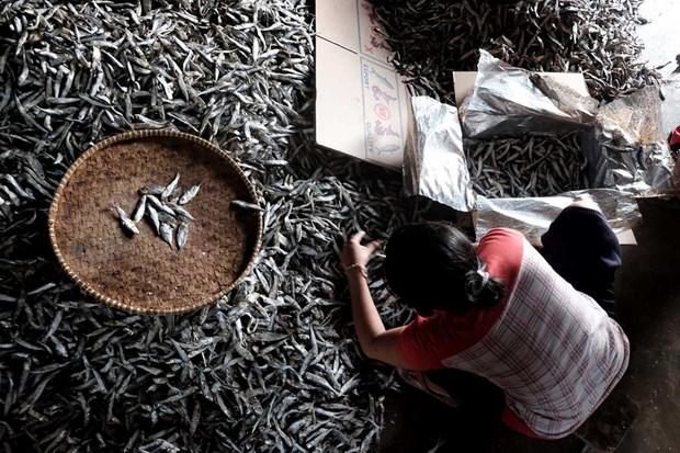 Indonesia intensifies monitoring of fish exports to China hinh anh 1