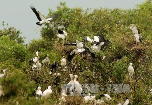 Mekong Delta faces decline in wild birds, fish and plants hinh anh 1