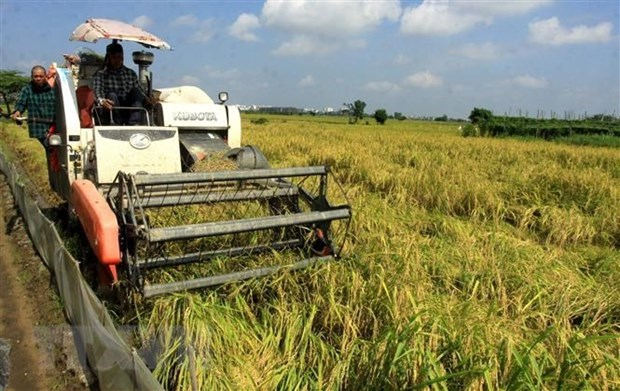 Vietnam to work to ensure food security hinh anh 1