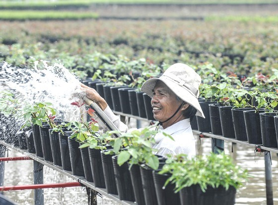Mekong Delta prepares flowers for upcoming Tet hinh anh 1