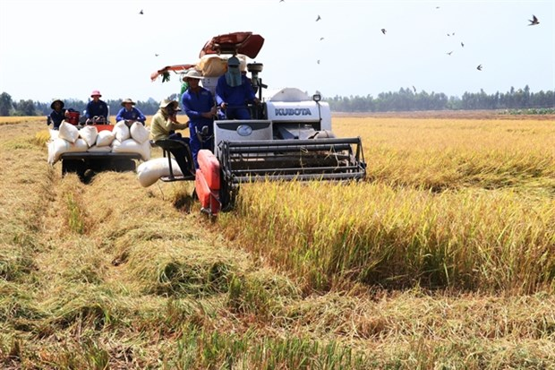 Dong Thap expands high quality rice cultivation hinh anh 1