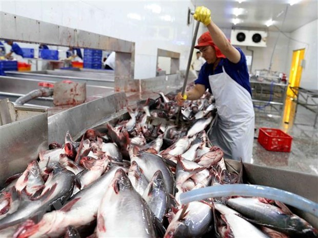 Tra fish export value hits 1.2 billion USD in 10 months hinh anh 1