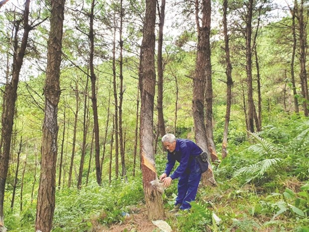 Rubber industry told to target sustainability hinh anh 1