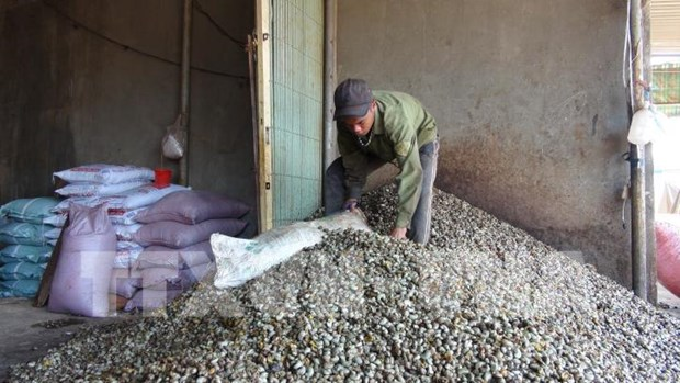 Dutch firm to invest in circular cashew nut production model in Binh Phuoc hinh anh 1