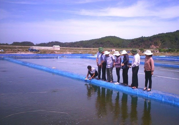 Vietnamese hard clams become world first to win ASC certificate hinh anh 1