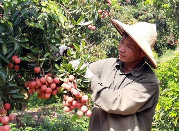 Export target of over 41 billion USD within reach: Agricultural sector hinh anh 1