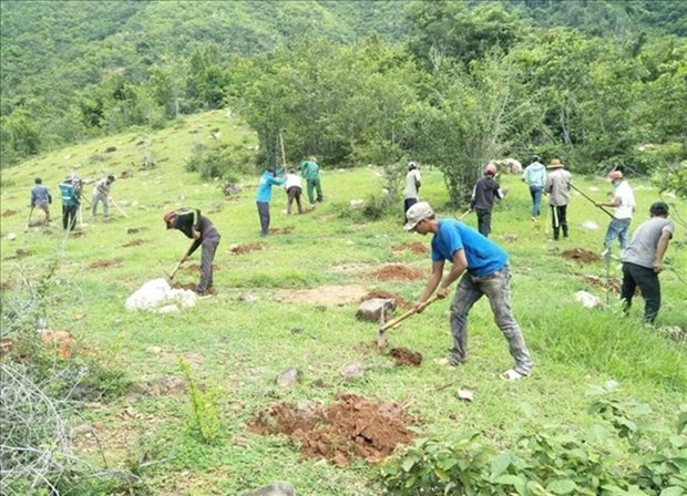 Ninh Thuan looks to forest management to develop economy hinh anh 1