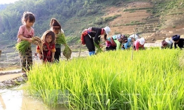 Vietnam's child labour rate 2 percentage points lower than region's average: survey hinh anh 1