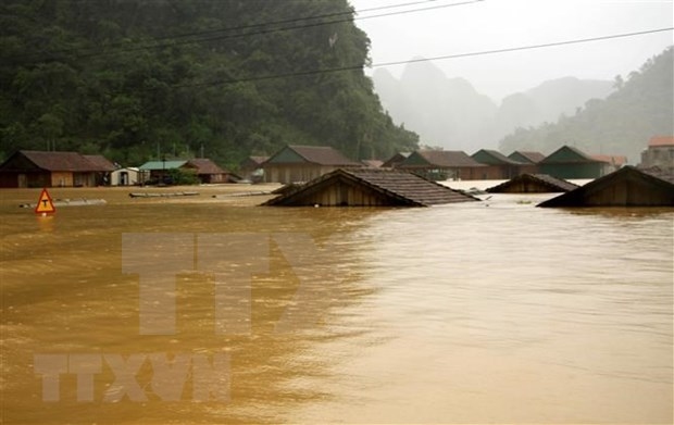 Prime Minister directs provision of seeds to flood-hit provinces hinh anh 1