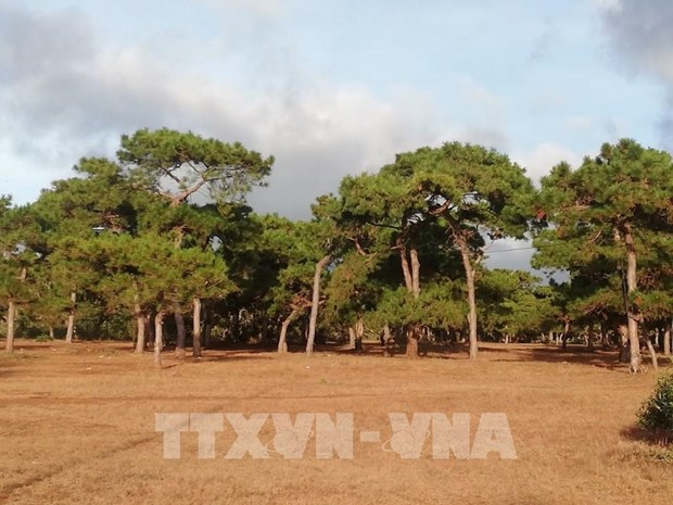 PM requests impact assessment for Gia Lai golf course project hinh anh 1