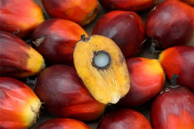 Malaysia: Palm oil goes down from eight-year high hinh anh 1