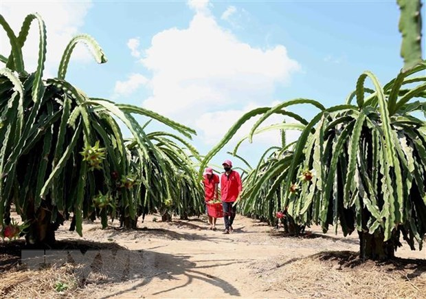 UKVFTA a push for Vietnam's agricultural exports to UK hinh anh 1