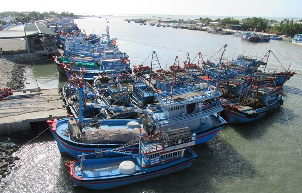 Vietnam makes progress in fight against IUU fishing hinh anh 1