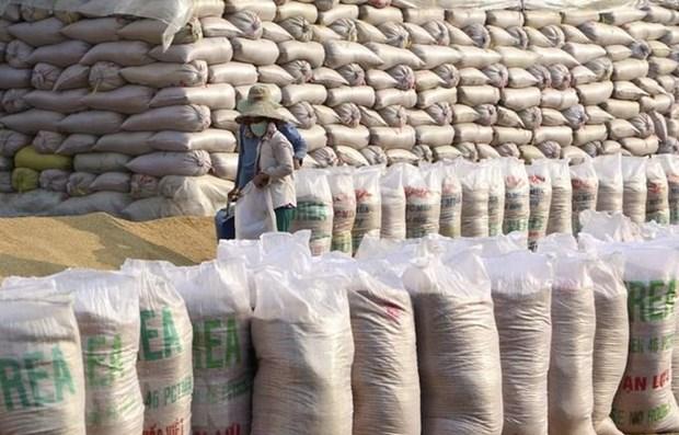 Vietnam imports Indian broken rice hinh anh 1