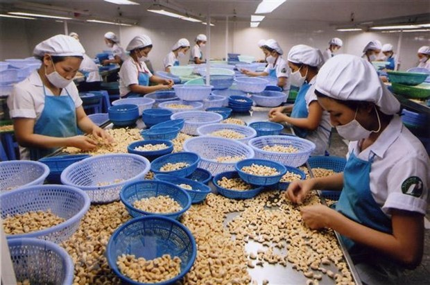Global foothold the target for Binh Phuoc cashew nuts hinh anh 1