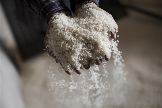 Cambodia exports 11,200 tonnes of organic rice in 2020 hinh anh 1