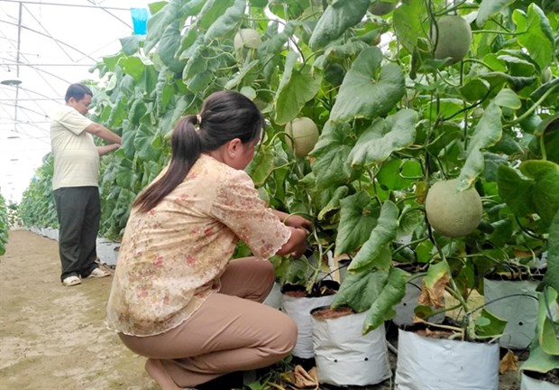 Tien Giang aims to create jobs for 16,000 labourers in 2021 hinh anh 1