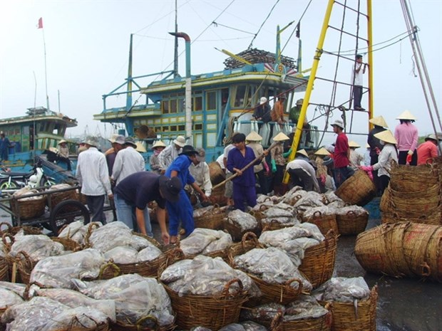 Fishery sector carries out electronic traceability hinh anh 1