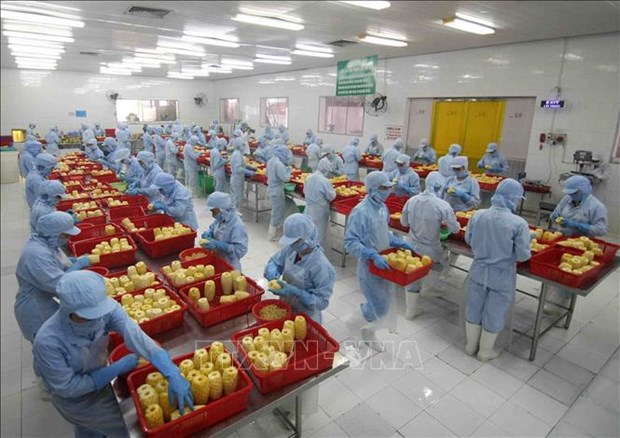 RCEP to help farm produce expand presence in global markets hinh anh 1