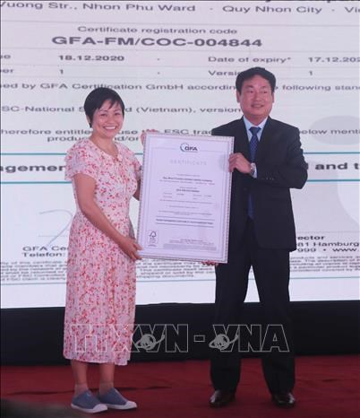 Binh Dinh: nearly 4,200 ha of forests certificated by FSC hinh anh 1