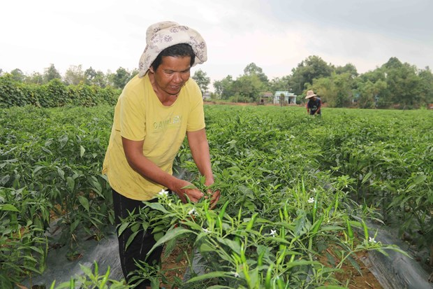 Tra Vinh lifts over 4,000 households out of poverty in 2020 hinh anh 1