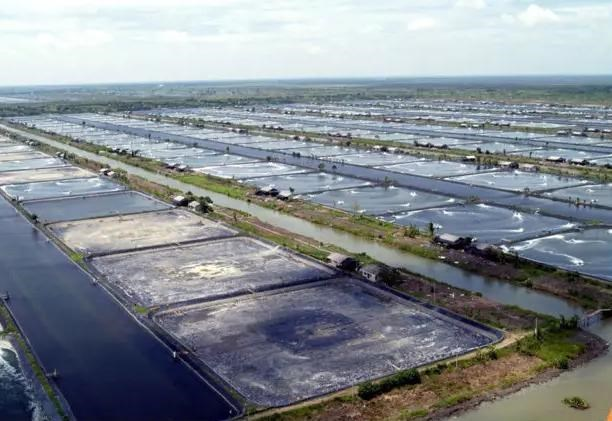 Indonesia aims to become world's largest vannamei shrimp producer hinh anh 1