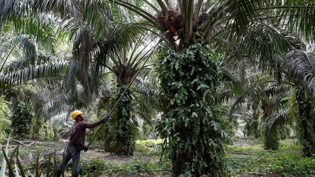 Malaysia files WTO lawsuit against EU on palm-biofuel curbs hinh anh 1