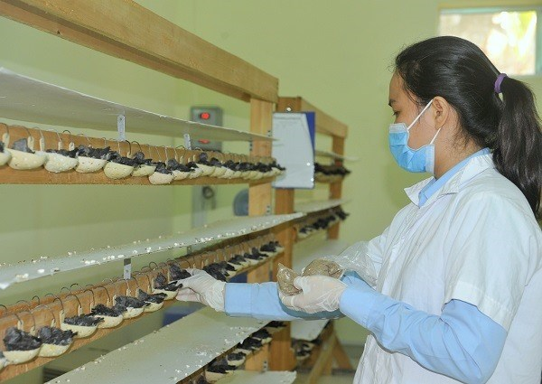 Bird's nest exports set to soar in coming years hinh anh 1