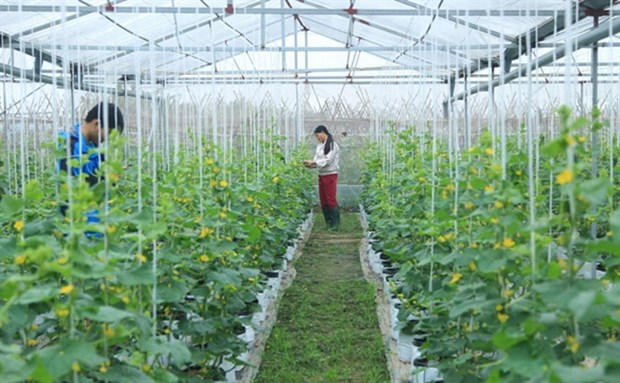 Hanoi promotes science-technology in agricultural production hinh anh 1