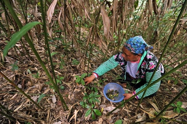 Vietnam achieves poverty reduction goals hinh anh 1