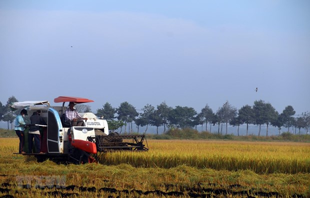 Support of agricultural insurance fees extended until year-end hinh anh 1