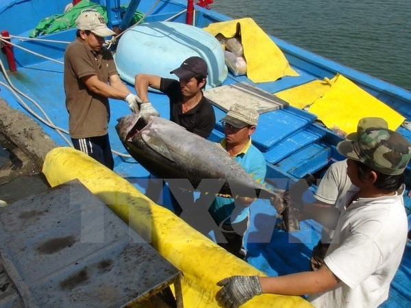 Exporters rejoice at surging tuna orders in January hinh anh 1